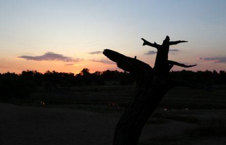נשימה לנשמה – עוגנים לנשמה מתוך פרשת ויקרא